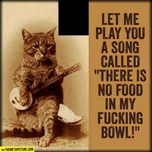 funny-cat-song-no-food